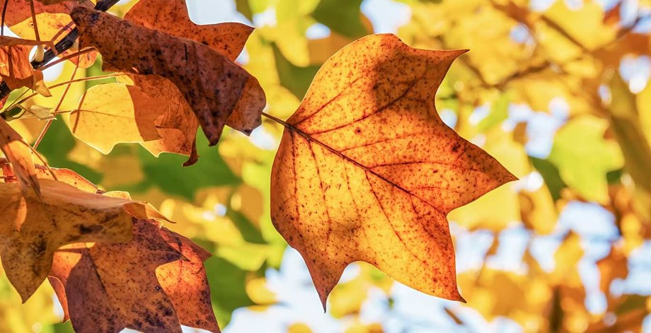 Fall is an ideal time to plan meetings that emphasize change and abundance.
