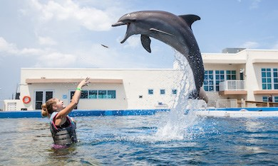 marineland-dolphin-encounter