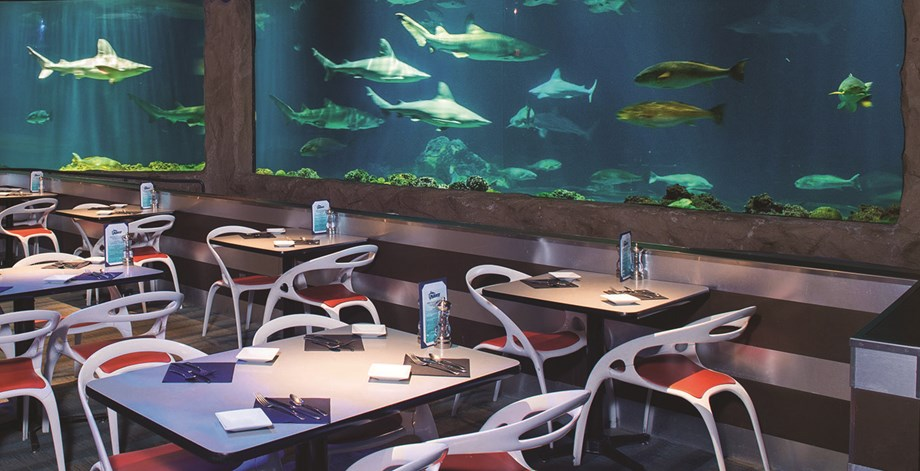 Sink your teeth into lunch at the Sharks Underwater Bar and Grill.