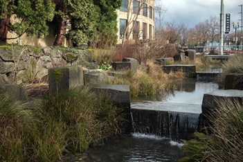 Rain-garden-oregon-convention-center