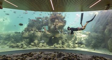 Australia S Daydream Island Resort Reopens After 71 Million